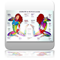 Chart - Exercise & Muscle Guide - Female